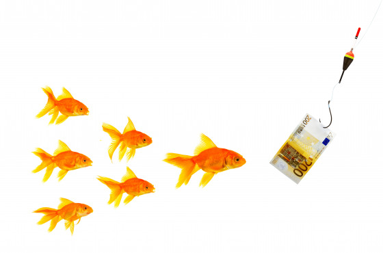 Goldfishes and money on a white background